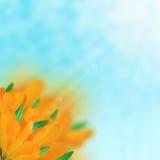 Ramo del azafrán stock de ilustración