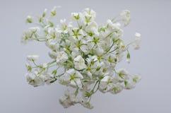 Ramo del blanco de la primavera imagenes de archivo
