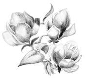 Ramo del bosquejo de la flor Fotografía de archivo