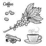 Ramo del caffè Pianta con le foglie, bacche Bevanda naturale della caffeina Bastoni di cannella, anice illustrazione di stock