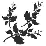Ramo del cespuglio del tè con le foglie ed i fiori Illustrazione botanica Vettore Fotografia Stock