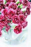 Ramo del clavel en florero Fotografía de archivo libre de regalías
