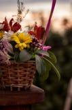 Ramo del crisantemo en la fotografía de madera del escritorio Imágenes de archivo libres de regalías
