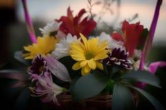 Ramo del crisantemo en la fotografía de madera del escritorio Fotos de archivo libres de regalías