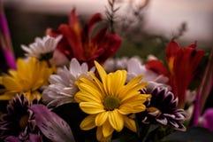 Ramo del crisantemo en la fotografía de madera del escritorio Imagen de archivo libre de regalías