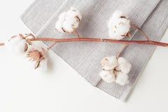 Ramo del fiore della pianta di cotone su fondo bianco Immagine Stock