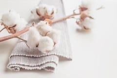 Ramo del fiore della pianta di cotone su fondo bianco Fotografia Stock