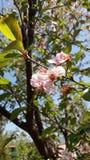 Ramo del fiore e di giorno soleggiato Immagine Stock Libera da Diritti