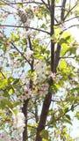 Ramo del fiore e di giorno soleggiato Immagini Stock Libere da Diritti