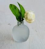 Ramo del jazmín en un florero Imágenes de archivo libres de regalías