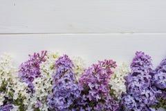 Ramo del lillà sull'bordi di legno bianco-dipinti Fotografia Stock Libera da Diritti