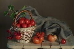 Ramo del otoño en un fondo colorido Imagenes de archivo