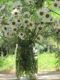 Ramo del país de margaritas blancas Imagen de archivo libre de regalías
