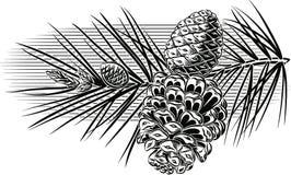 Ramo del pino con le pigne illustrazione vettoriale