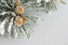 Ramo del pino con neve Fotografie Stock Libere da Diritti