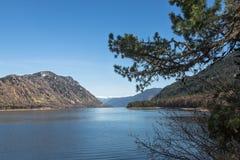 Ramo del pino in priorità alta, riva del lago della montagna Immagini Stock Libere da Diritti