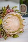 Ramo del Protea Imagen de archivo libre de regalías