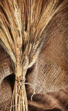 Ramo del trigo Fotografía de archivo