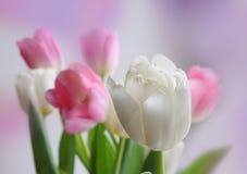 Ramo del tulipán imagenes de archivo
