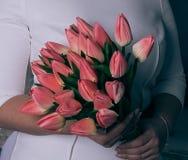 Ramo del tulipán de flores en la mano de la mujer Fotos de archivo