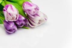 Ramo del tulipán en la superficie blanca Imagenes de archivo
