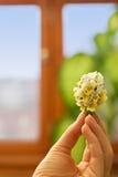 Ramo del wildflower del resorte Fotografía de archivo