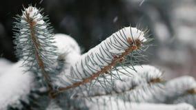 Ramo dell'abete che ondeggia nel vento durante la bufera di neve stock footage