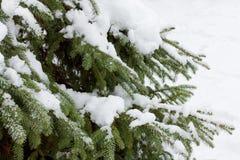 Ramo dell'abete del fondo con i fiocchi della neve e della pigna Feste di natale Fotografia Stock