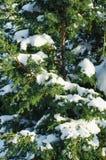 Ramo dell'abete in neve - fondo di feste di Natale fotografia stock libera da diritti