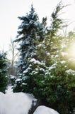 Ramo dell'abete in neve - fondo di Natale immagini stock libere da diritti