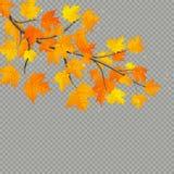 Ramo dell'acero con le foglie variopinte isolate su fondo trasparente ENV 10 royalty illustrazione gratis