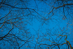 Ramo dell'albero asciutto Immagine Stock
