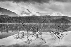 Ramo dell'albero caduto che attacca fuori dall'acqua blu del lago della montagna Fotografia Stock