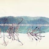 Ramo dell'albero caduto che attacca fuori dall'acqua blu del lago della montagna Immagine Stock Libera da Diritti