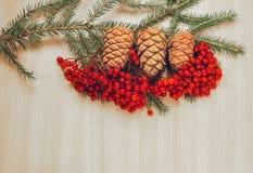 Ramo dell'albero di Natale Immagine Stock