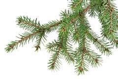 Ramo dell'albero di Natale Fotografie Stock