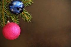 Ramo dell'albero di Natale con la palla rosa e blu su un buio Immagine Stock Libera da Diritti