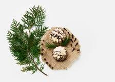 Ramo dell'albero di Natale, dolce, decorazione del nuovo anno su bianco Concetto creativo, spazio per testo, logo Disposizione pi Fotografie Stock