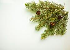 Ramo dell'albero di Natale e dei coni su fondo bianco Fotografia Stock