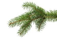 Ramo dell'albero di Natale isolato sui precedenti bianchi Fotografie Stock