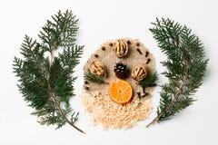 Ramo dell'albero di Natale, noci, fetta di mandarino, decorazione del nuovo anno del cono su bianco Concetto creativo, spazio Fotografie Stock Libere da Diritti