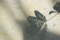 Ramo dell'ombra delle foglie sui precedenti concreti fotografia stock