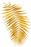 Ramo dell'oro della palma brillante immagini stock