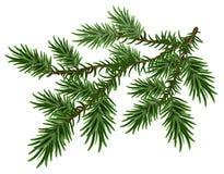 ramo dell'Pelliccia-albero Ramo lanuginoso verde del pino illustrazione vettoriale