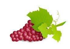 Ramo dell'uva con l'uva rossa Illustartion realistico di vettore Fotografie Stock