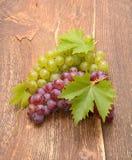 Ramo dell'uva organica matura Immagine Stock
