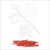 Ramo dell'uva passa royalty illustrazione gratis