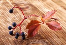 Ramo dell'uva selvaggia su una tavola di legno Fotografia Stock Libera da Diritti