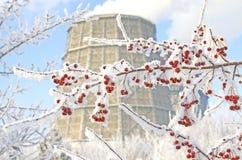 Ramo della bacca coperto di neve sui precedenti della torre di raffreddamento immagini stock