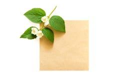 Ramo della carta sbocciante di Kraft dello spazio in bianco e del gelsomino isolata su wh Fotografia Stock